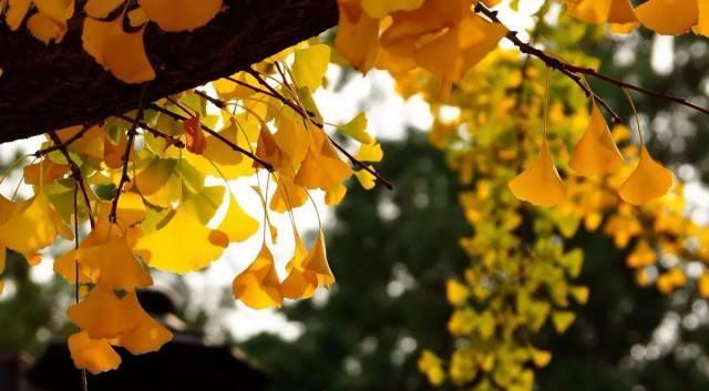 为什么说北京的秋天最美?